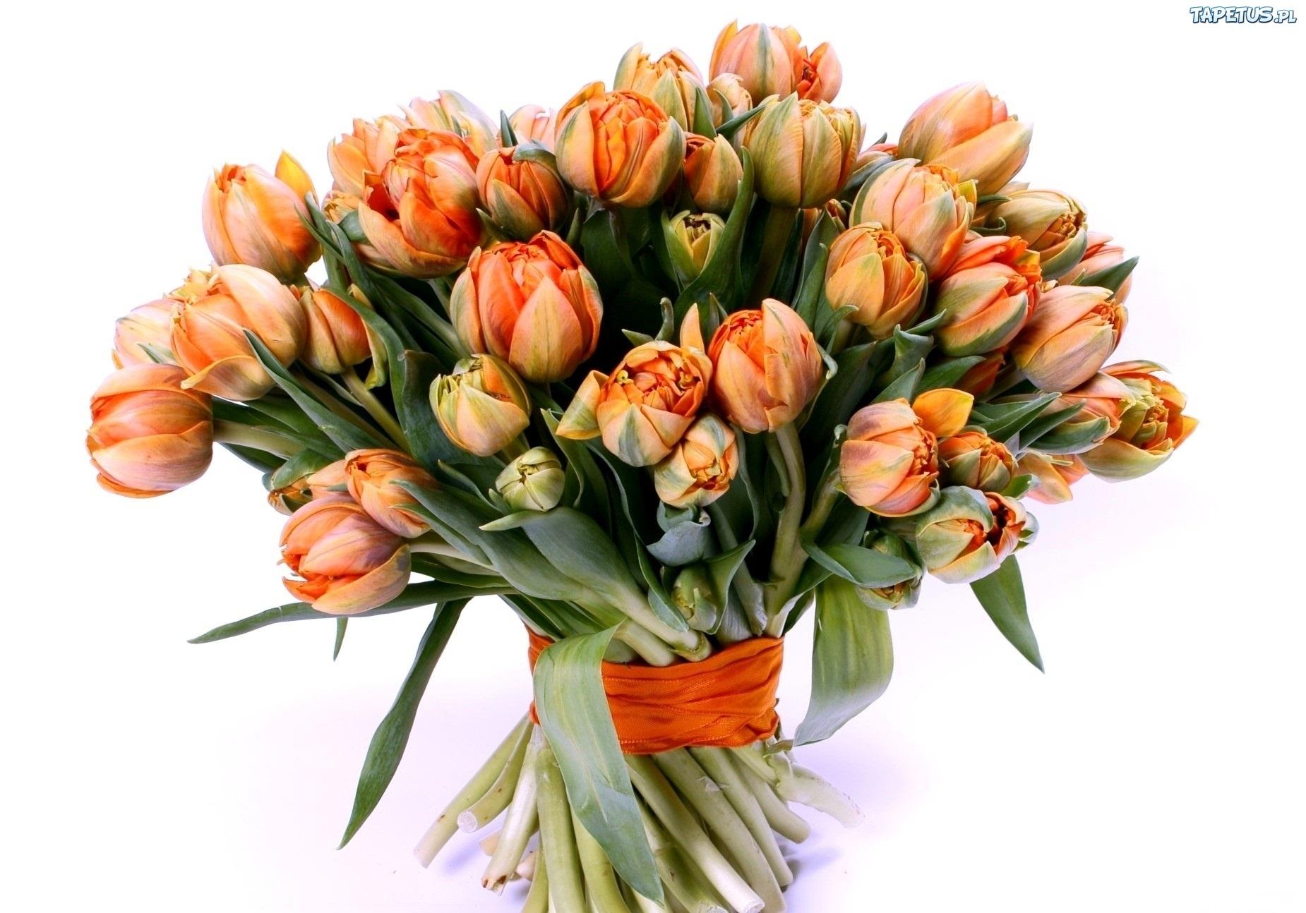 146460_bukiet-tulipanow.jpg