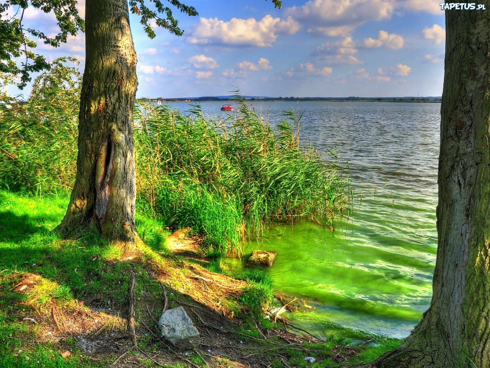 157251_jezioro-szuwary-drzewa.jpg