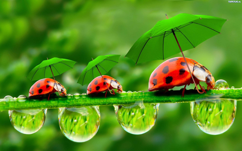 211692_biedronki-parasole-rosliny-krople-wody.jpg