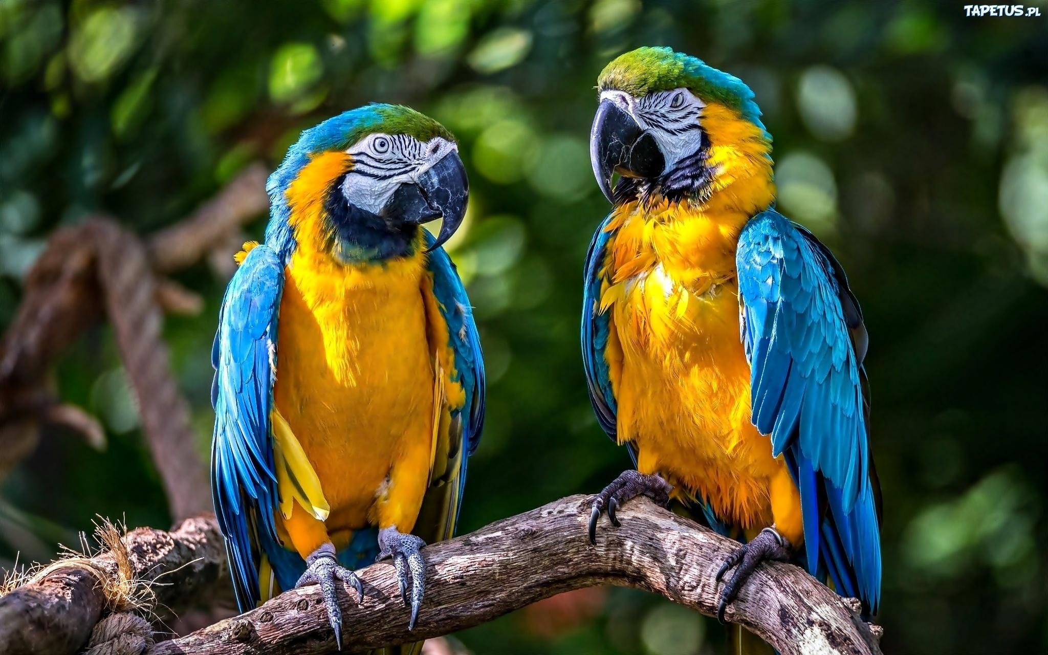221335_dwie-papugi-galaz.jpg
