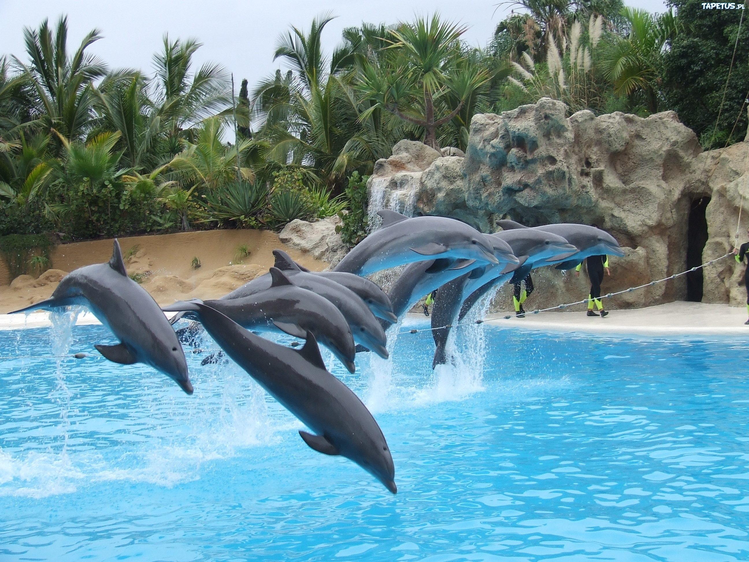 242885_delfinki-basen-skaly-palmy.jpg